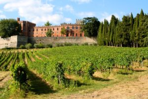 brolio-vineyards